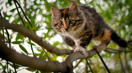 Kittens In Trees Best Wallpaper