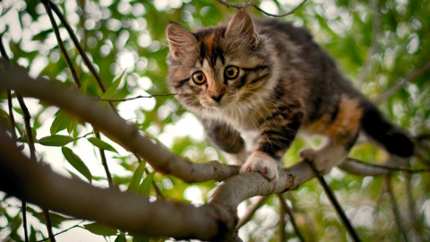 Kittens In Trees wallpapers high quality