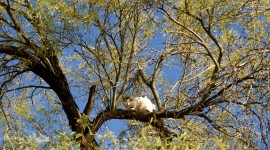 Kittens In Trees Desktop Wallpaper