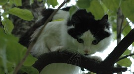 Kittens In Trees Photo Free#1