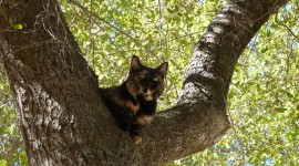 Kittens In Trees Photo#2