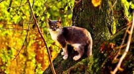 Kittens In Trees Wallpaper 1080p