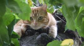 Kittens In Trees Wallpaper