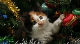 Kittens In Trees Wallpaper For PC