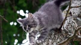 Kittens In Trees Wallpaper Free