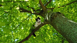 Kittens In Trees Wallpaper Full HD
