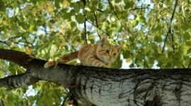 Kittens In Trees Wallpaper HQ