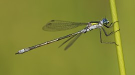 Lestes Desktop Wallpaper HD