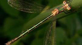 Lestes Photo