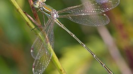 Lestes Photo Download#1