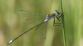 Lestes Wallpaper Full HD