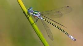 Lestes Wallpaper Gallery