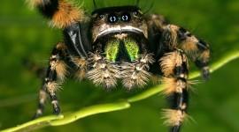 Spiders Best Wallpaper