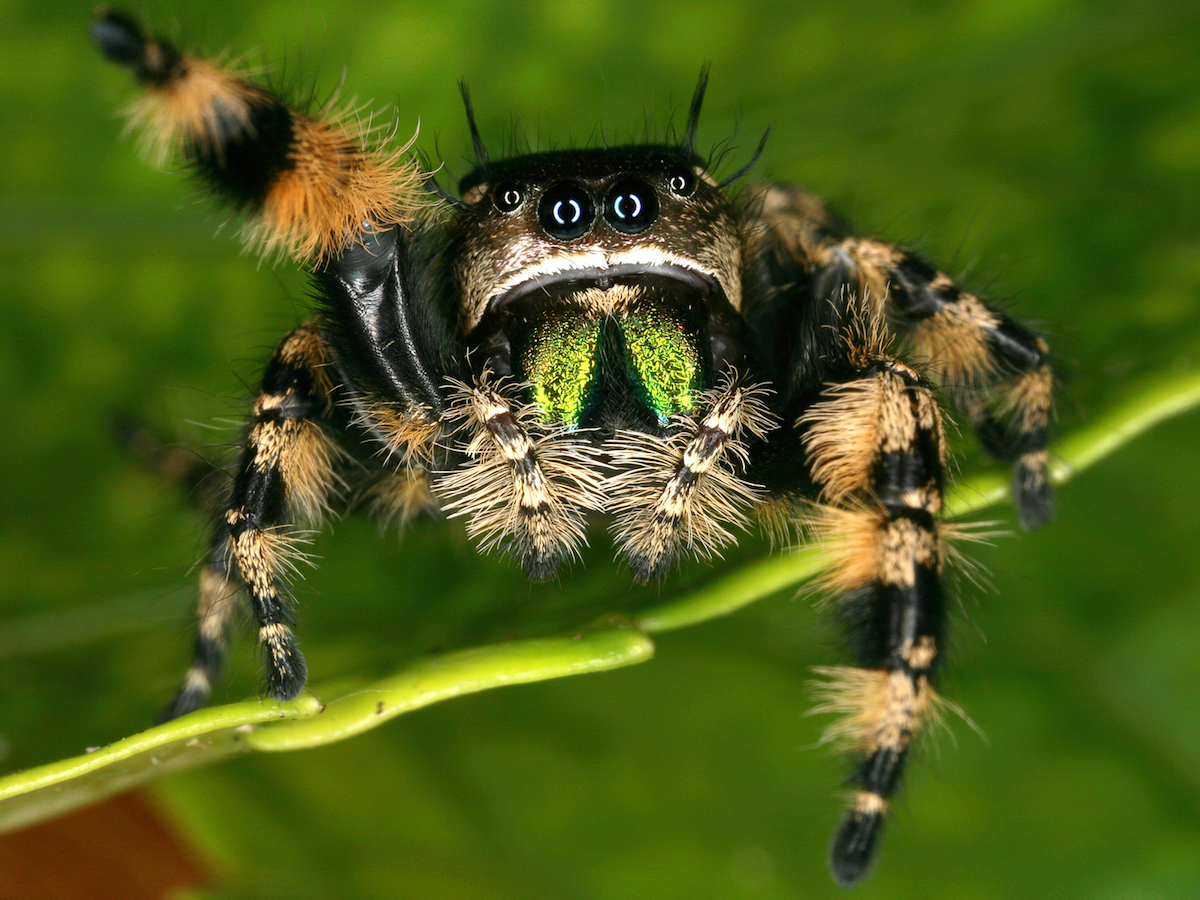 Spiders Wallpapers High Quality | Download Free