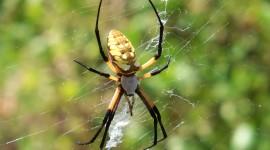 Spiders Desktop Wallpaper