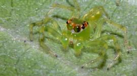 Spiders Desktop Wallpaper HD
