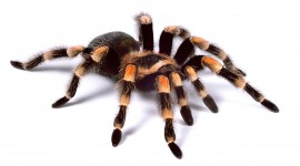 Spiders Photo Download#1