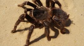 Spiders Photo Free