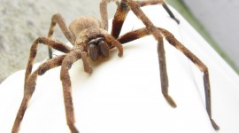 Spiders Photo Free#2