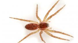 Spiders Photo Free#3