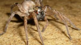 Spiders Photo#1