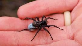 Spiders Photo#2