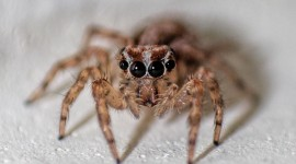 Spiders Wallpaper Full HD