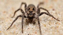 Spiders Wallpaper Gallery