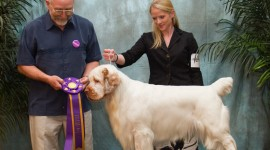 The Clumber Spaniel Wallpaper Gallery