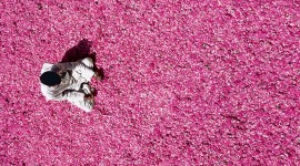 The Road Of Rose Petals Photo