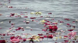 The Road Of Rose Petals Photo Free