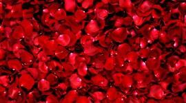 The Road Of Rose Petals Wallpaper 1080p