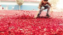 The Road Of Rose Petals Wallpaper