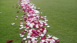 The Road Of Rose Petals Wallpaper For IPhone