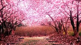 The Road Of Rose Petals Wallpaper Free
