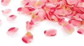 The Road Of Rose Petals Wallpaper Full HD