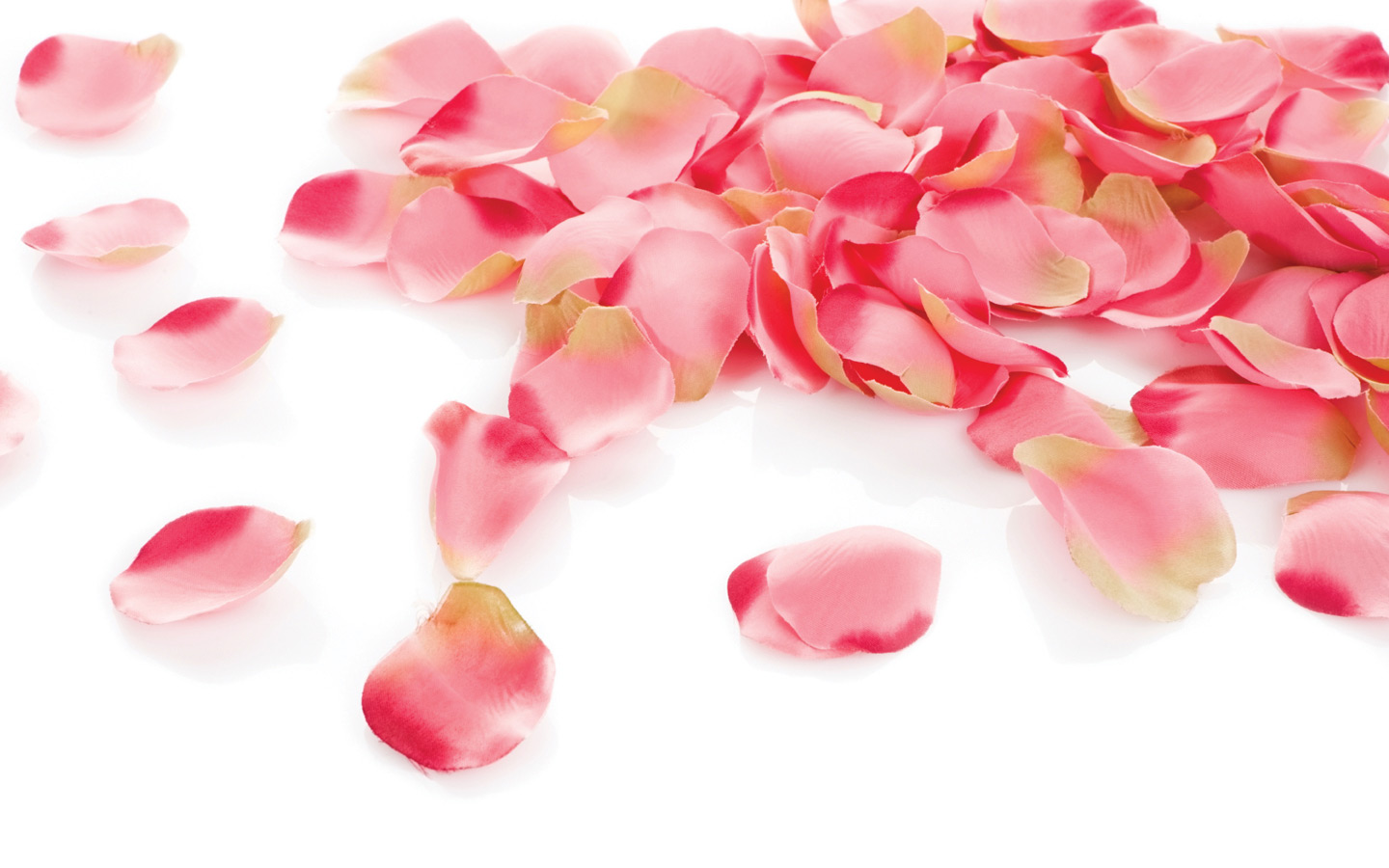 The Road Of Rose Petals Wallpapers High Quality