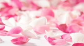 The Road Of Rose Petals Wallpaper Gallery