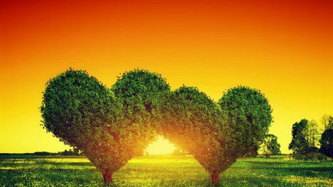 Tree Lovers wallpapers high quality
