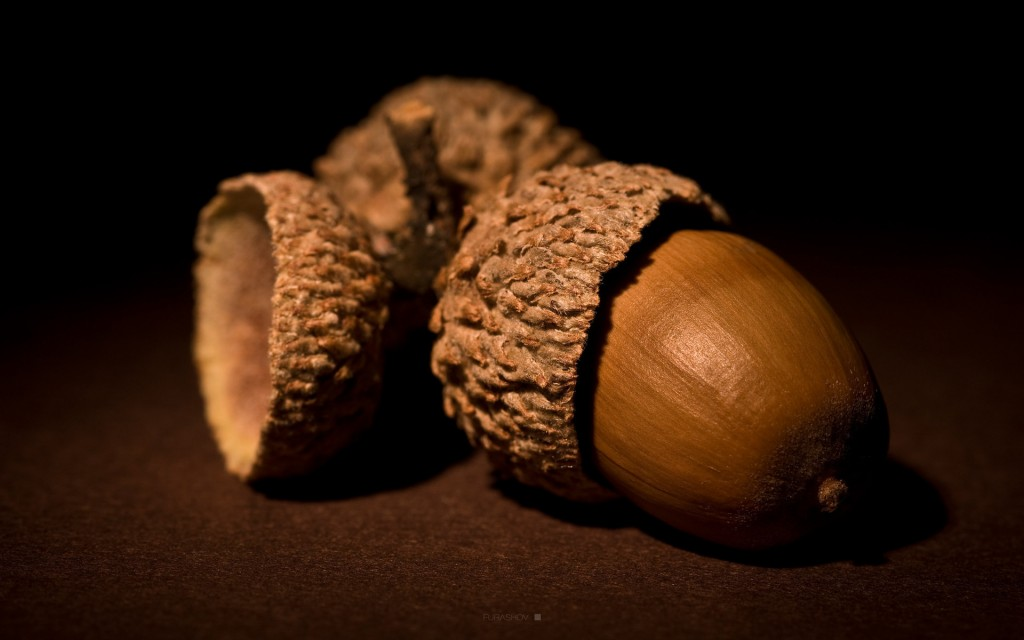 4K Acorns wallpapers HD