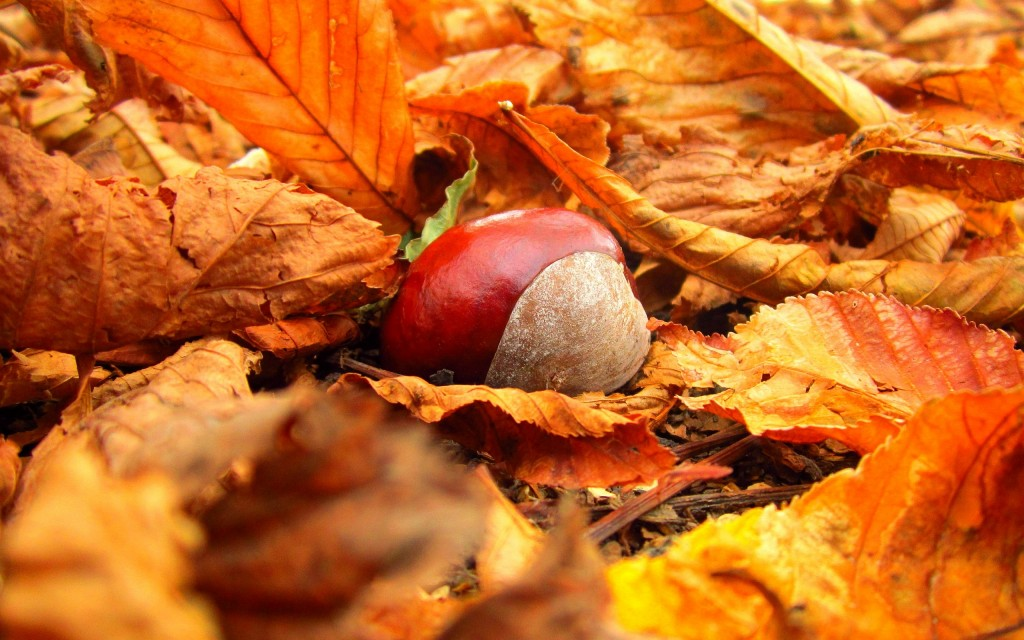 4K Chestnuts wallpapers HD