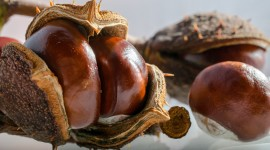 4K Chestnuts Photo