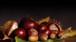 4K Chestnuts Wallpaper Full HD
