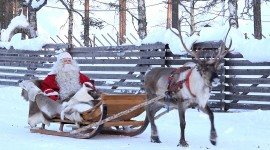 4K Christmas Reindeer Photo