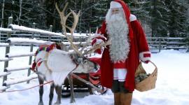 4K Christmas Reindeer Photo Download