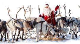 4K Christmas Reindeer Photo Free