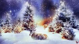 4K Christmas Reindeer Photo#1