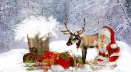 4K Christmas Reindeer Wallpaper 1080p