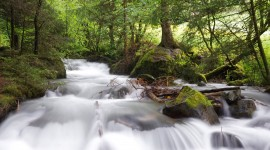 4K Rivulet Photo Download