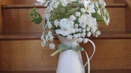 Ammi Majus Wallpaper
